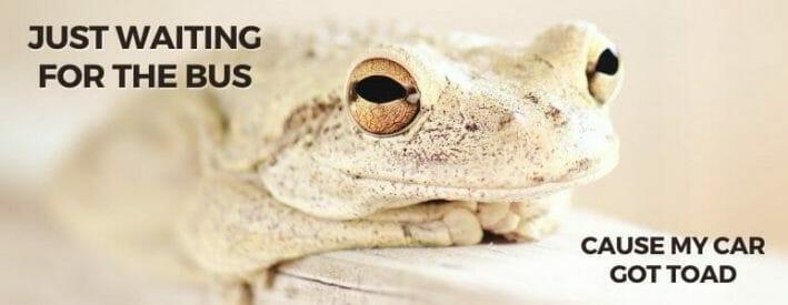Got Toad Meme